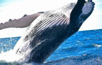 市場の底は近い!?「クジラ」がビットコインを買い増していることが判明!