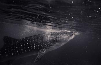 暴落でもクジラは着実にビットコインを蓄積!長期的には上昇目線か