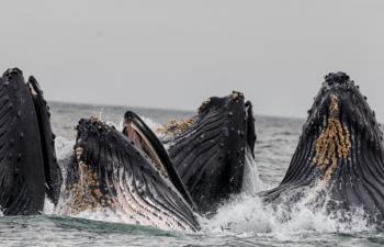 何かが起きる!?ビットコイン過去最高額の「クジラ」移動確認!